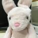 ぶたウサギ