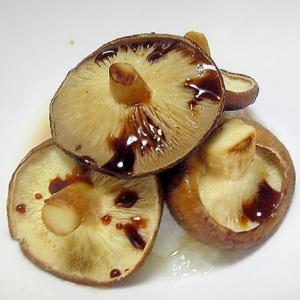 椎茸の網焼きおろし醤油がけ