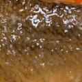 赤魚の煮付けの生姜添え♪