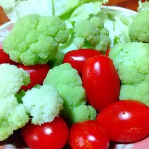 【朝活】白茎ブロッコリーとフラガールのサラダ