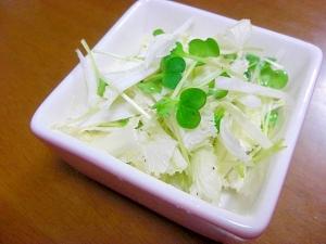 白菜とカイワレのサラダ