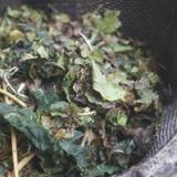 カルシウム補給に☆手作り桑の葉茶