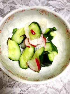 胡瓜とラディッシュの漬物(一夜漬け)