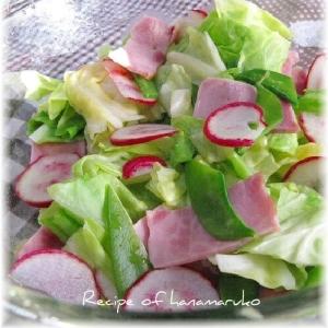春キャベツとラディッシュの彩りサラダ