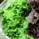 長期保存出来て、お握りや薬味に最適!青紫蘇の塩漬け
