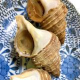 簡単おつまみ♪つぶ貝の生姜煮