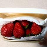 苺の冷蔵保存方法